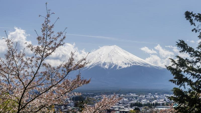 A vista bonita de Monte Fuji cobriu com a neve em um dia ensolarado, com a árvore florescida no primeiro plano, Japão fotografia de stock royalty free