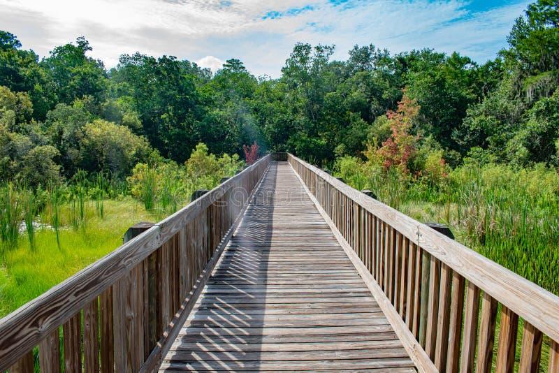 Vista bonita do cais e da floresta verde fotos de stock