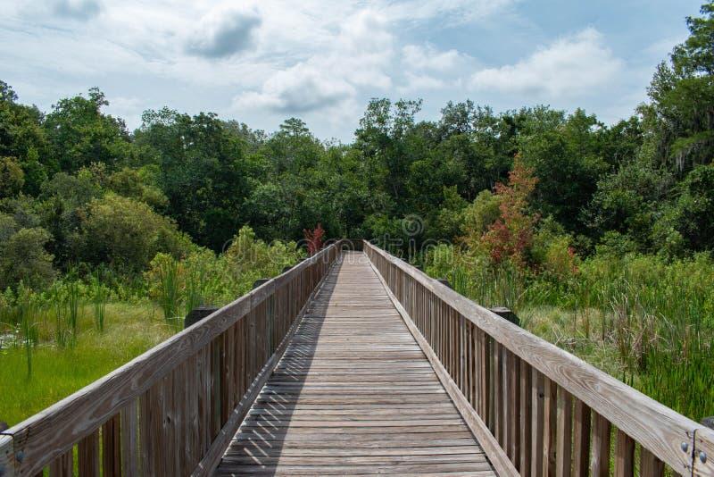 Vista bonita do cais e da floresta verde 2 fotografia de stock royalty free