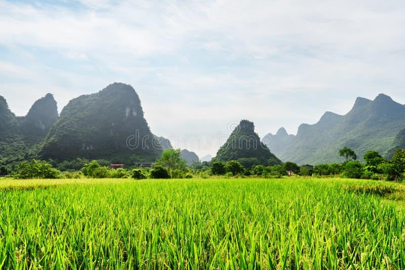 Vista bonita do campo verde do arroz e de montanhas cênicos do cársico imagem de stock royalty free
