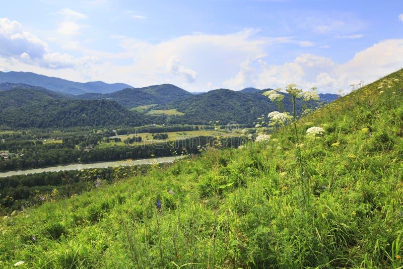 Vista bonita do rio Katun do dedo de diabo de montanha fotos de stock