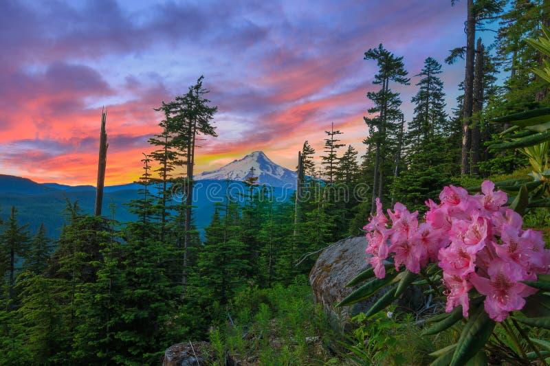 Vista bonito da capa da montagem em Oregon, EUA foto de stock