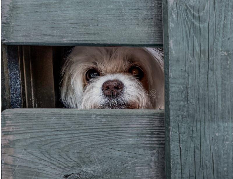 Vista branca do cão fotos de stock