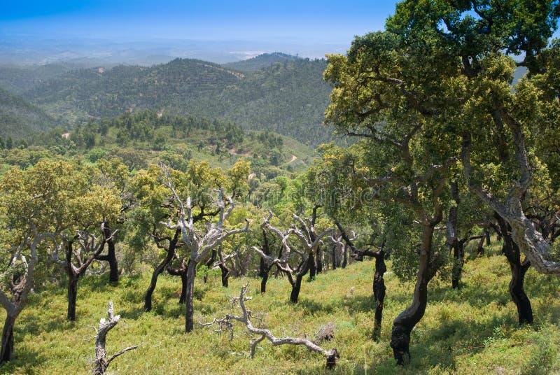 Vista cénico de montanhas de Monchique - Portugal imagens de stock