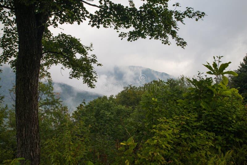 Vista Cênica, Pista de Cordilheira Azul fotografia de stock royalty free