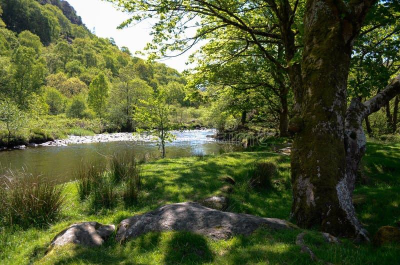 Vista cênico ao lado das árvores em um banco e abaixo de um rio calmo fotos de stock royalty free