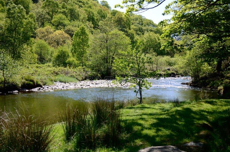 Vista cênico através do rio para as árvores no banco distante imagem de stock royalty free
