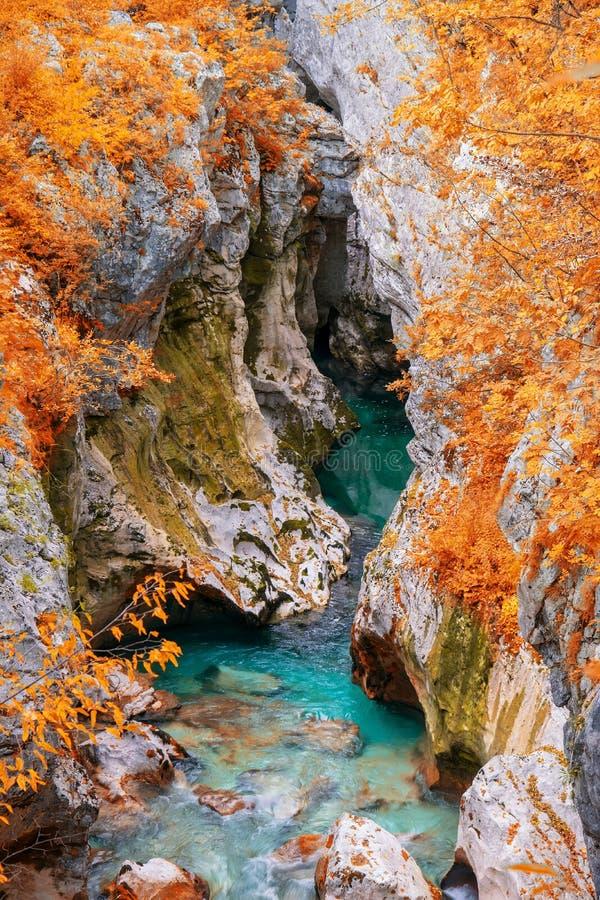 Vista cênico da grande garganta do rio de Soca perto de Bovec, Eslovênia no dia do outono foto de stock