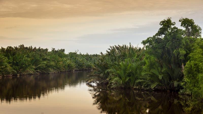 Vista cênico da selva tropical selvagem na ilha de Bornéu, Indone fotografia de stock