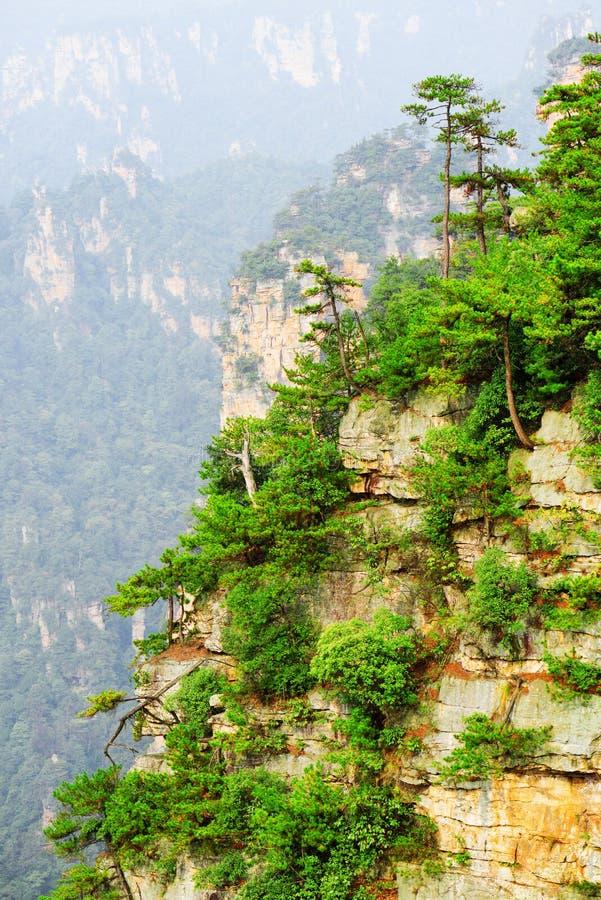 A vista cênico das árvores verdes que crescem sobre a rocha, Avatar balança fotos de stock