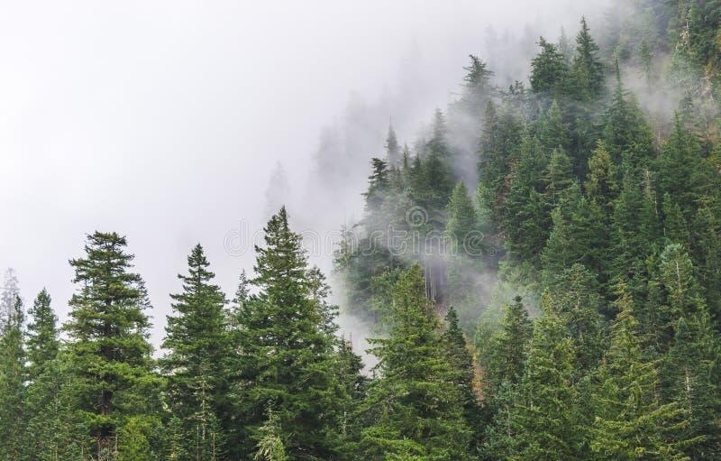 Vista cênico das florestas da montanha que cobrem pela névoa fotografia de stock royalty free