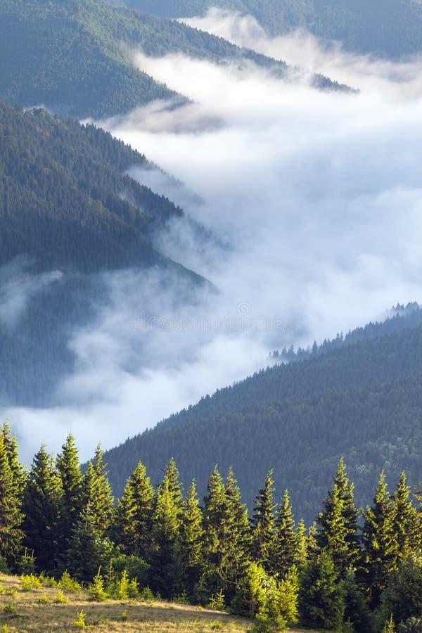 Vista cênico das florestas da montanha que cobrem pela névoa imagens de stock