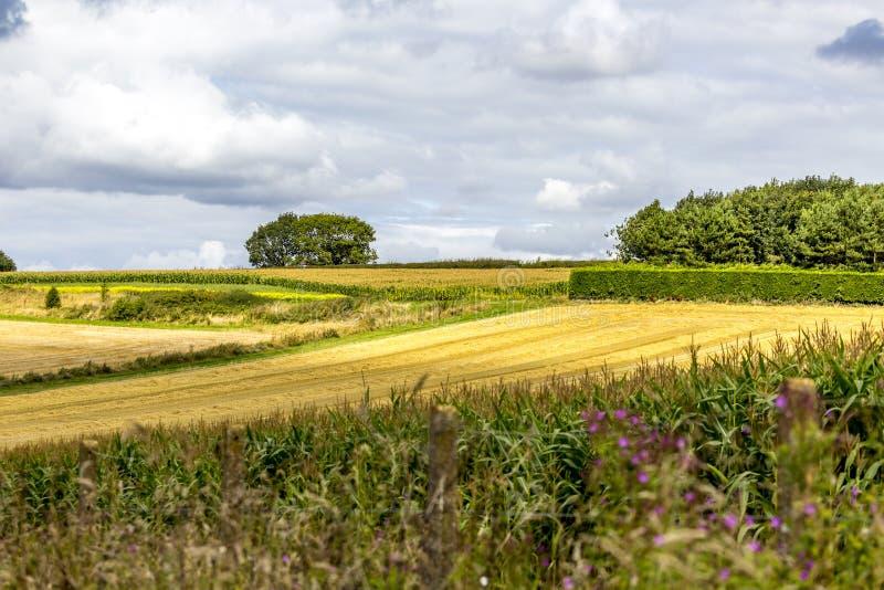 Vista cênico do campo rural fotos de stock royalty free