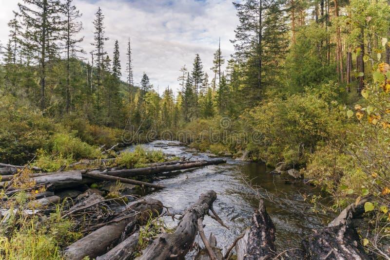Vista cênico do rio no taiga Siberian do outono foto de stock