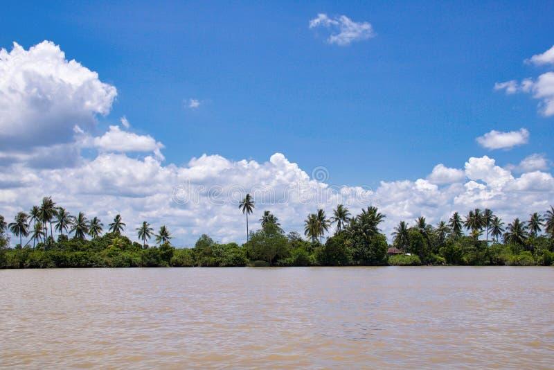 Vista cênico do rio tropical em kalimantan, Bornéu indonésio fotos de stock royalty free