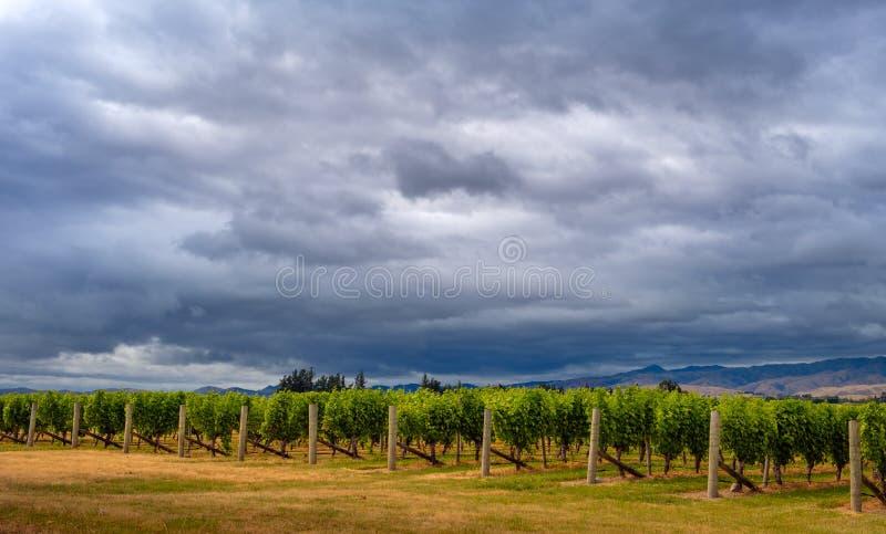 Vista cênico dos vinhedos com céu dramático, Marlborough, NZ imagens de stock royalty free