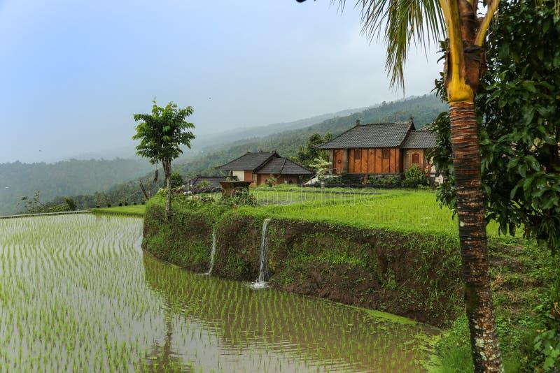Vista cênico na almofada de arroz com casas mim o fundo fotos de stock