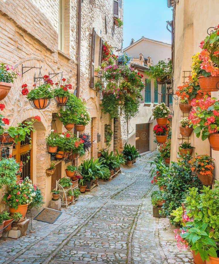 Vista cênico na vila de Spello, florido e pitoresca em Úmbria, província de Perugia, Itália fotos de stock royalty free