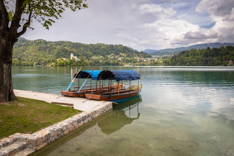 A vista cênico no pletna liso de madeira bonito dos barcos de enfileiramento no lago sangrado, slovenia, vai conceito verde imagem de stock