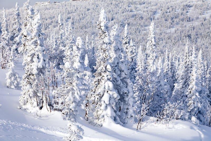 Vista cênico panorâmico da parte superior do inverno das paisagens da montanha val imagem de stock royalty free