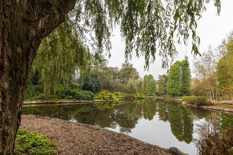 Vista cênico sobre uma lagoa em um jardim botânico quadro por um babylon que chora o salgueiro imagens de stock royalty free