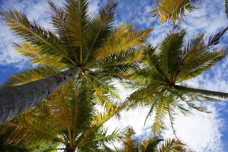 Vista calda dell'occhio alla palma ed al chiaro cielo blu fotografia stock libera da diritti