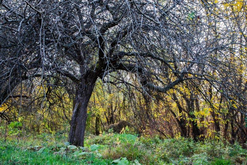 Vista calma di un percorso verde con l'albero fotografia stock libera da diritti
