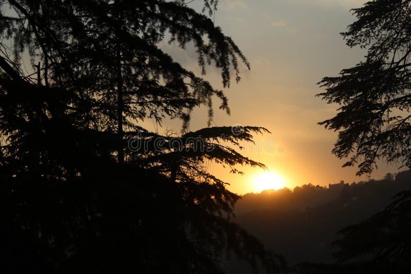Vista capace di tramonto del segno in foresta profonda fotografia stock