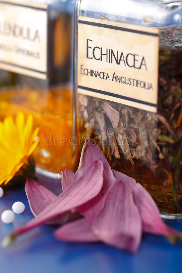 Vista cercana del extracto de la planta de Angustifolia del Echinacea imagen de archivo libre de regalías