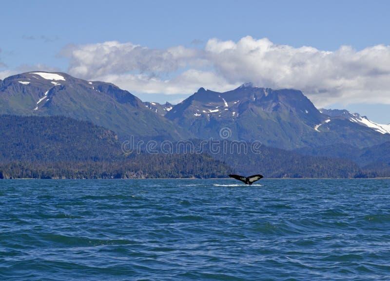 Vista d'Alasca scenica con una coda della balena di humpback fotografie stock