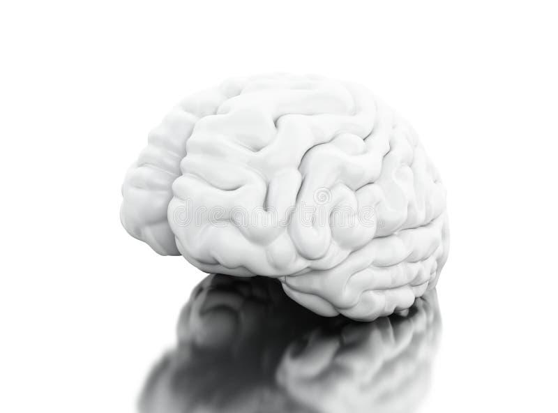 vista 3d di cervello umano Concetto di anatomia di scienza illustrazione di stock
