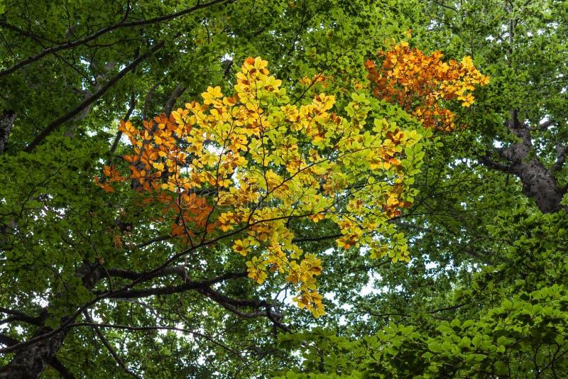 Vista da árvore do outono no parque nacional da montanha em Abruzzo Itália fotografia de stock