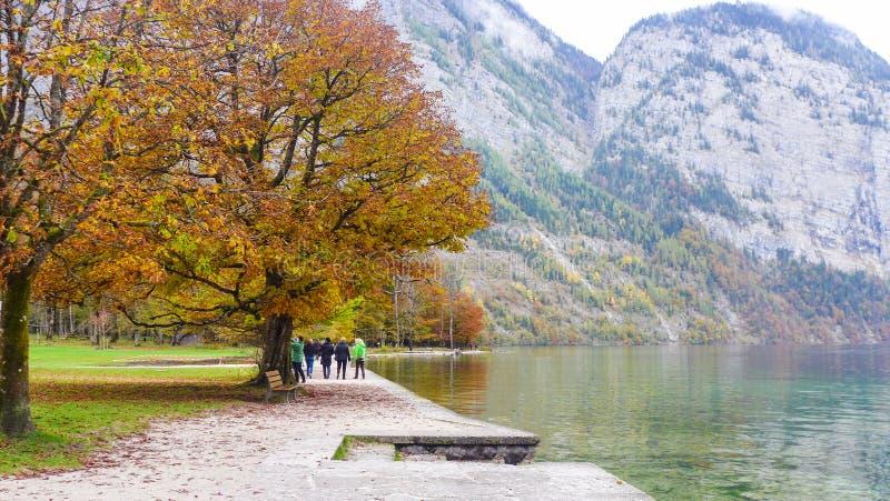 Vista da árvore perto do lago no outono imagem de stock royalty free