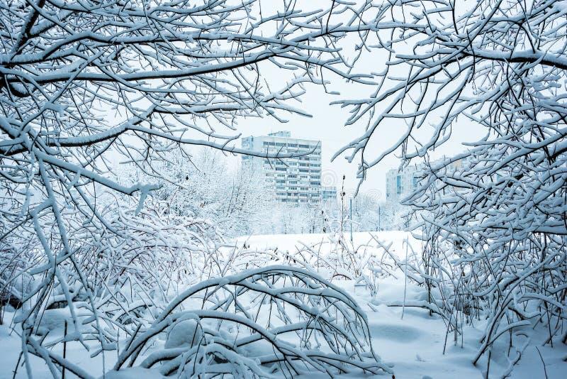 Vista da cidade coberto de neve através dos ramos em Chertanovo imagem de stock