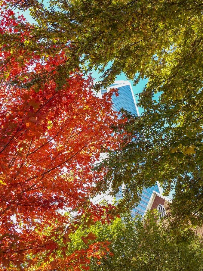 Vista da construção de vidro do arranha-céus através dos ramos de árvore coloridos foto de stock royalty free
