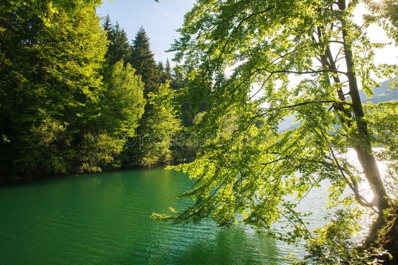 Vista da costa através das árvores ao lago da montanha no alvorecer imagens de stock