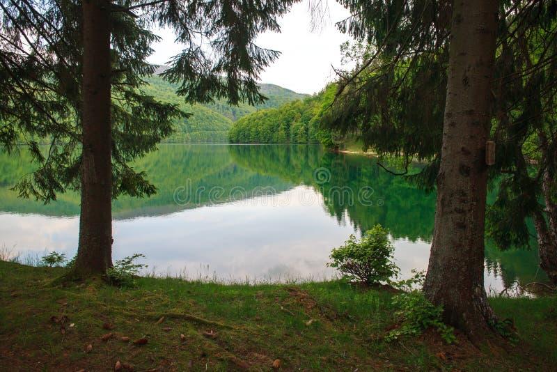 Vista da costa através dos pinheiros ao lago da montanha foto de stock royalty free