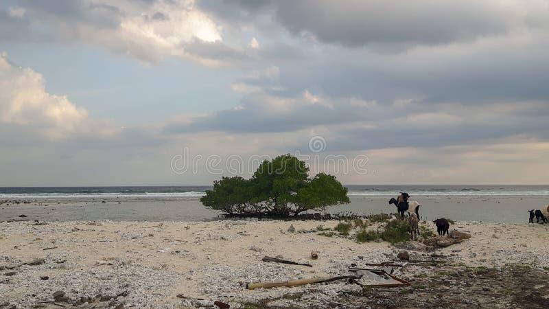 Vista da costa com mar e animais imagens de stock