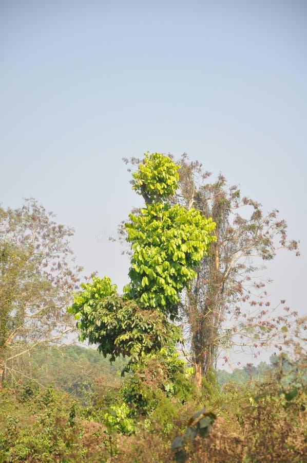 Vista da floresta bangladesh da reserva fotos de stock