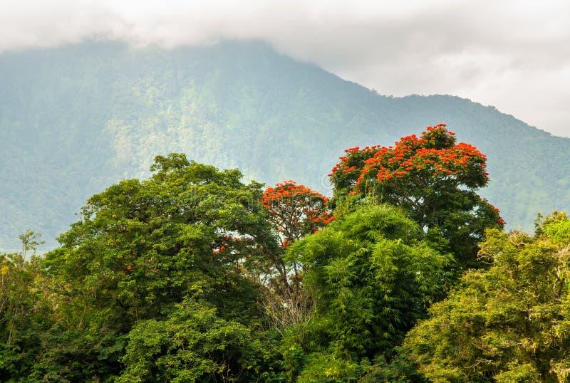 Vista da floresta da montanha imagem de stock royalty free