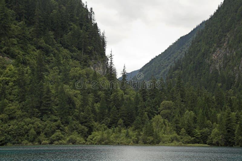 Vista da floresta e do vale pristine fotografia de stock royalty free