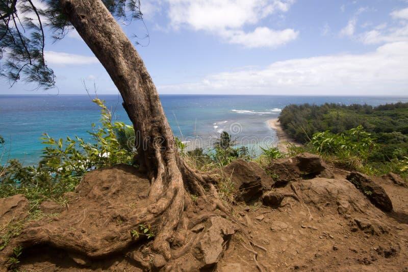 Vista da fuga de Hanakapiai que olha noroeste fotos de stock