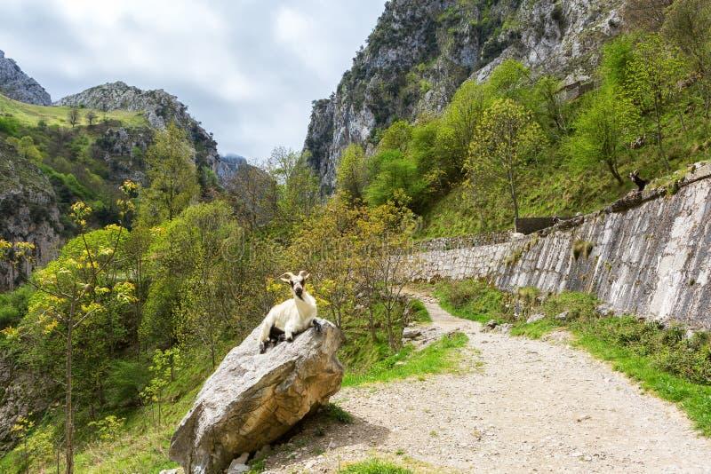 Vista da fuga dos cuidados da fuga de caminhada ou da Ruta del Cares, parque nacional de Picos de Europa, província de Leon, Espa imagem de stock