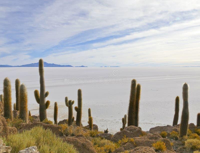 Vista da Isla Incahuasi su Salar de Uyuni, Altiplano, Salar de Uyuni, Bolivia immagini stock