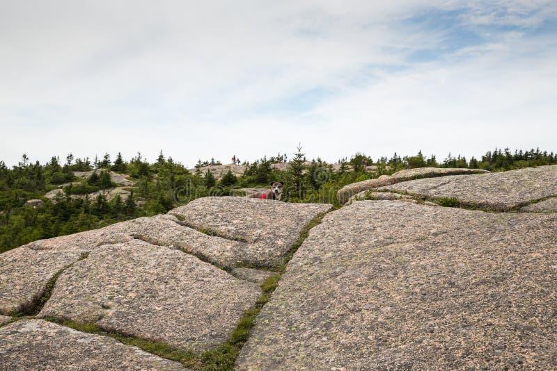 Vista da montanha de Cadillac no parque nacional do Acadia foto de stock