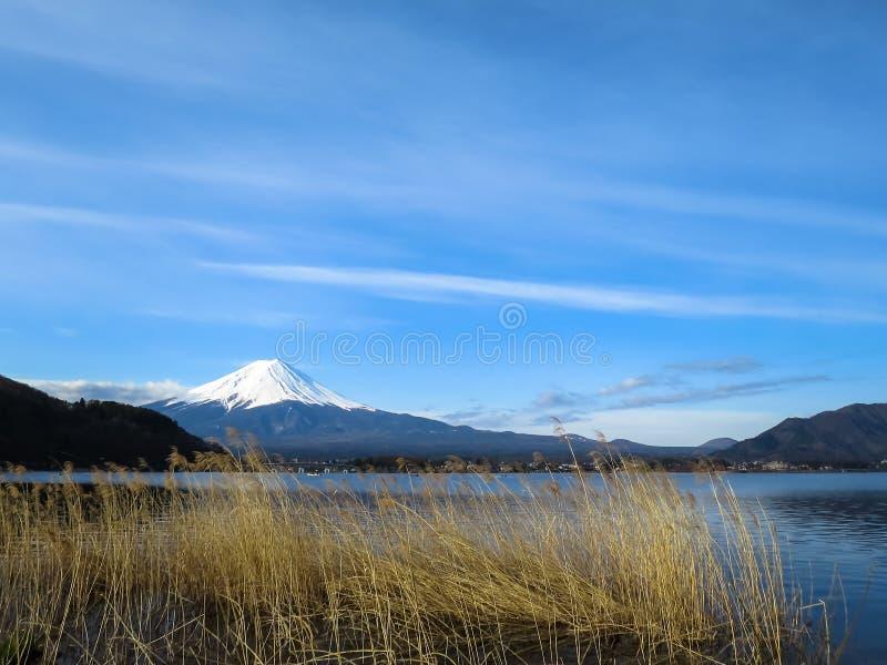 Vista da montanha de Fuji com parte superior branca da neve, flor FO da grama secada imagem de stock