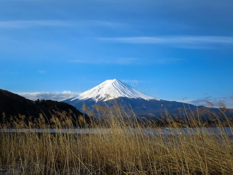 Vista da montanha de Fuji com parte superior branca da neve, flor FO da grama secada imagens de stock