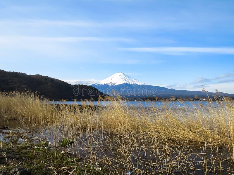 Vista da montanha de Fuji com parte superior branca da neve, foregroun da grama secada fotografia de stock