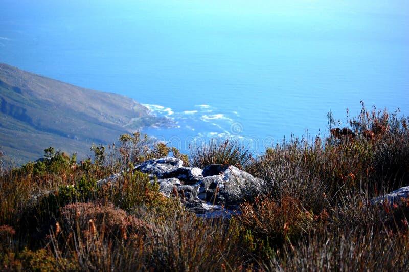 Vista da montanha da tabela, da África do Sul, do Cape Town, das plantas selvagens e do oceano fotos de stock royalty free