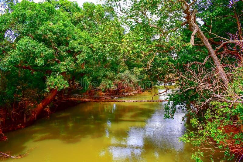 Vista da ponte de suspensão com hortaliças luxúrias sobre o rio fotografia de stock